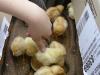 2008-aprile-maggio-scuole-casa-ed-animaletti-279
