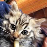 0 gatto