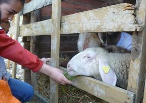 Animali della fattoria didattica