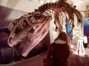 dinosauro-Giganotosaurus-carolini esposto nella mostra dinosauri a Gubbio