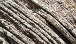 la pietra del bottaccione mostra la scomparsa dei dinosauri