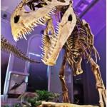 foto di scheletro di dinosauro fornita dall'organizzazione della mostra
